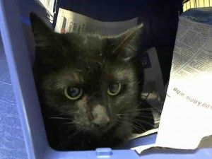 Help us Save NYC AC&C Shelter Cats