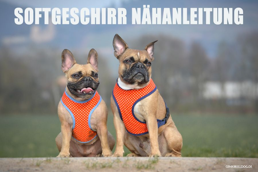 Selbstgenähte Hundemäntel   Softgeschirr, Nähanleitung und Hunde