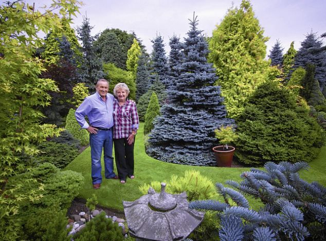 Conifer Garden Ideas evergreen shrub garden on hill slope with conifers evergreens ornamental grass in blue walled raised garden in different levels judy white gard Dave Ward And Wife Pat Among Their Conifers