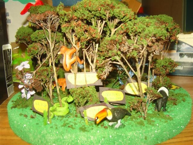 Tropical Rainforest Biome Project | Rainforest2.JPG | Diorama ...