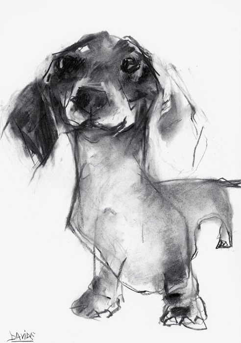 Dachshund - Friendly and Curious | Pinterest | Charcoal sketch ...