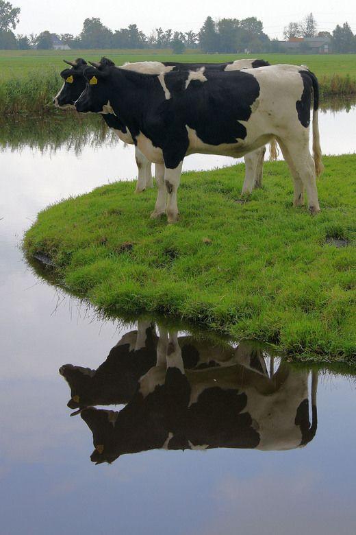 Espejos de la naturaleza! Amamos la sencillez, equilibrio y simplicidad que…