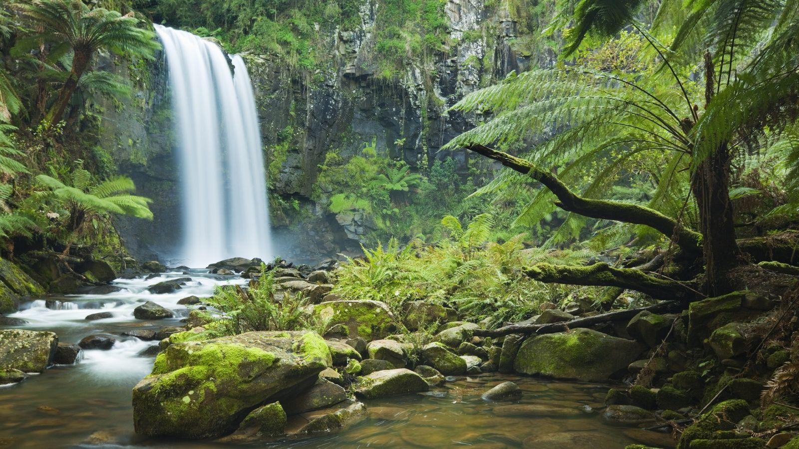 Pin by Denis Dilbaryan on World | Pinterest | Search, Rainforests ...