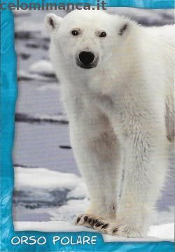 Amici Cucciolotti 2017: Fronte Figurina n. 238 Orso polare