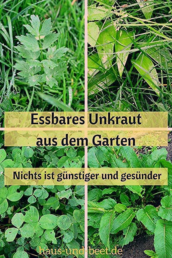Photo of Im Garten wächst essbares Unkraut – Haus und Beet