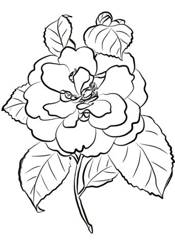 Camellia Flower Dibujo para colorear. Categorías: Camelia. Páginas ...