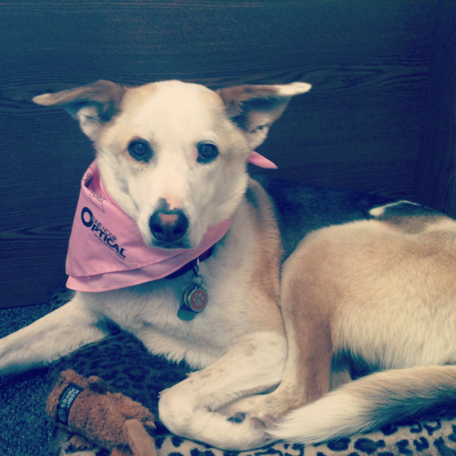 Meet Avy. She's a 3 year old Husky Mix adopted from