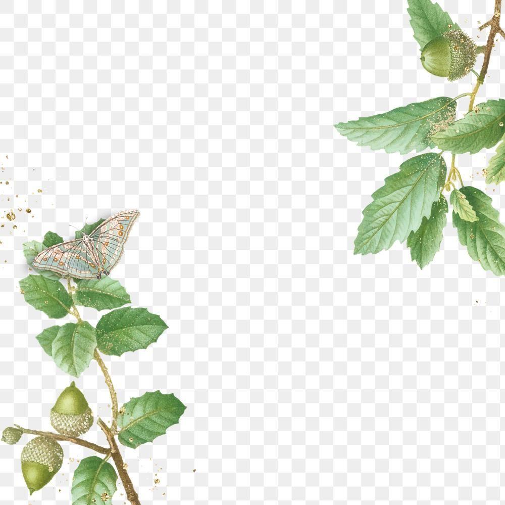 Green Oak Leaves Frame Png Design Space Free Image By Rawpixel Com Pam Green Oaks Green Frame Oak Leaves