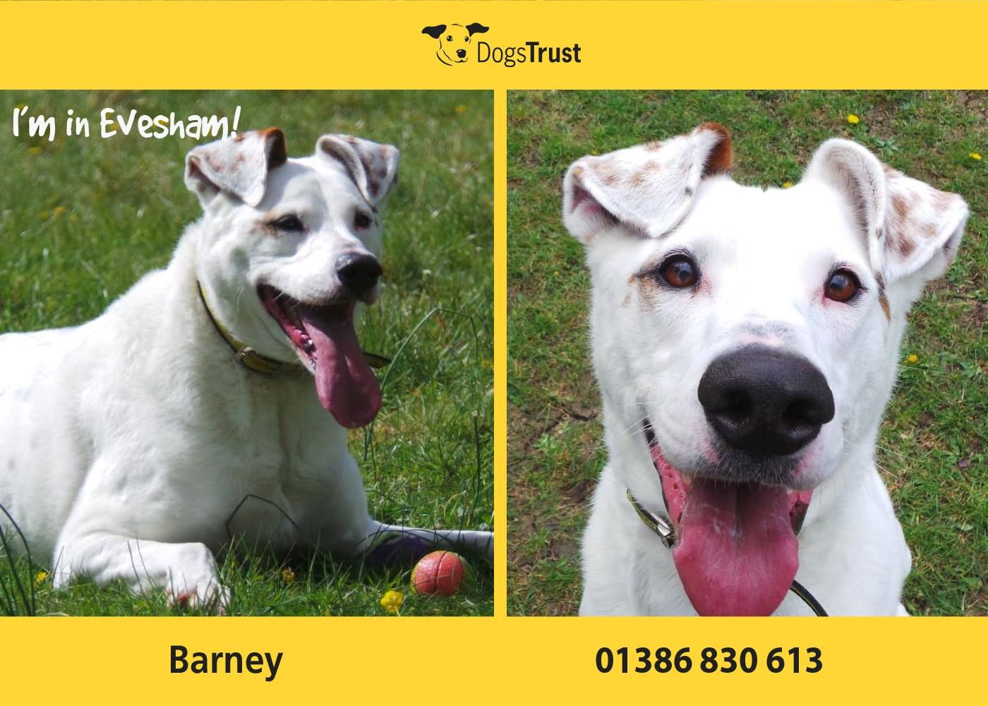 Barney from Evesham is a clever dog who is very confused