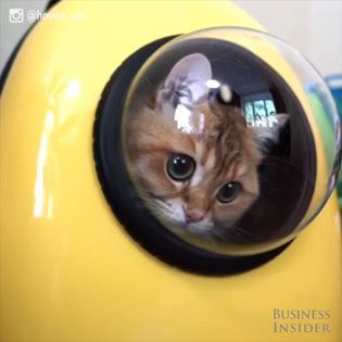The U-Pet backpack has a window so pets can see the world on the go.  🐺🐱🐭🐸🐻 #pets #dogs #cats