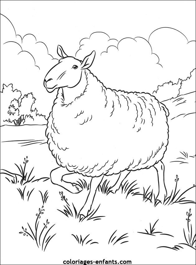 Coloriage Mouton A Imprimer 56 Moutons Pinterest School Themes