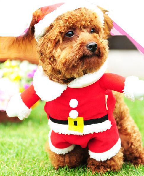 Aliexpress.com : Buy 2014 New Design Cute Christmas Dog Clothes Santa Pet Clothing Winter Warm Small Medium Dog Cat XS XL Size from Reliable clothes scarf suppliers on Play Petty  | Alibaba Group