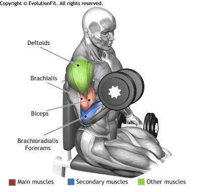 curl de biceps con mancuernas sentado