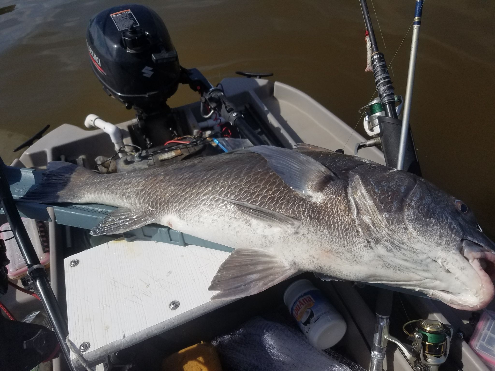 Tom Does It Again Down In Florida Here S His 35 Black Drum That He Brought In On His Twin Troller X10 The Good Fight Paid Off Best Fishing Fish Water Sports