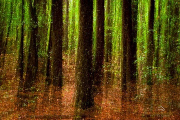 Hanmer Forest, Canterbury, New Zealand - Mike Hollman Photography