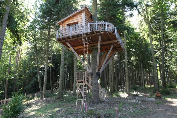 la cabane des douglas cabane dans les arbres jolies cabanes pinterest treehouse tree. Black Bedroom Furniture Sets. Home Design Ideas