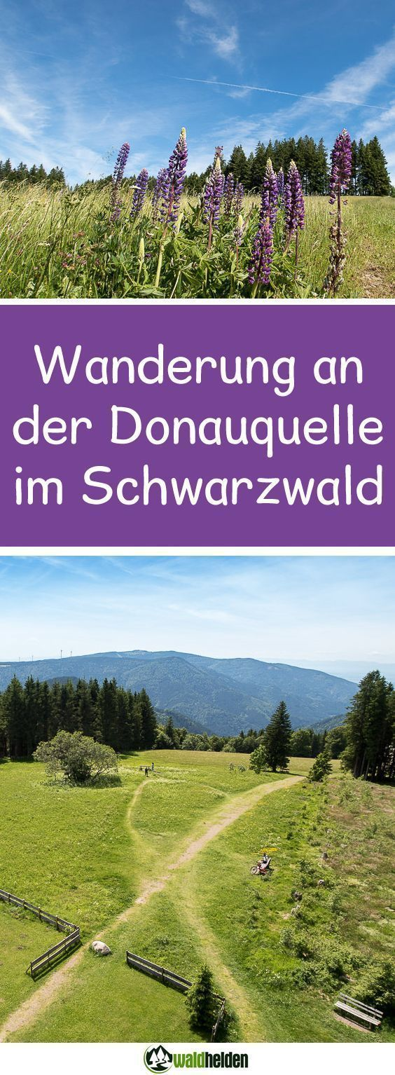 Photo of 1 Millionen Sterne Unterkunft – Glamping im Schwarzwald • Waldhelden Hundeblog