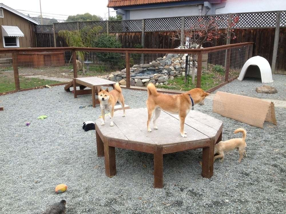 Create a dog playground   Dog playground, Dog backyard ...