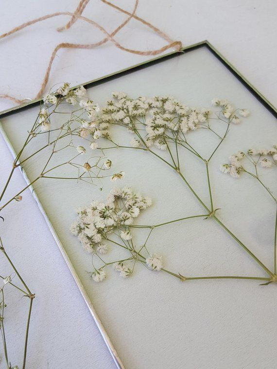 Photo of Pressed flower frame with baby breath / Pressed plants gypsophila suspended between glass / Pressed plant frame / Gift for nature lovers