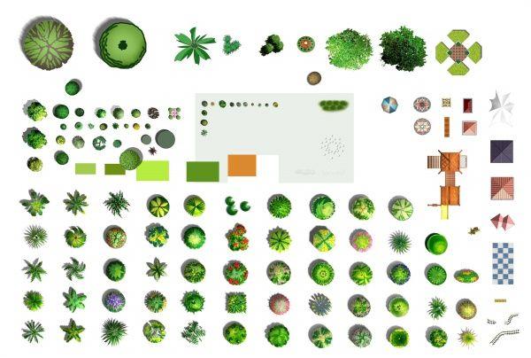 Psd Plane Tree Materials Tree Plan Photoshop Landscape Landscape Design Plans