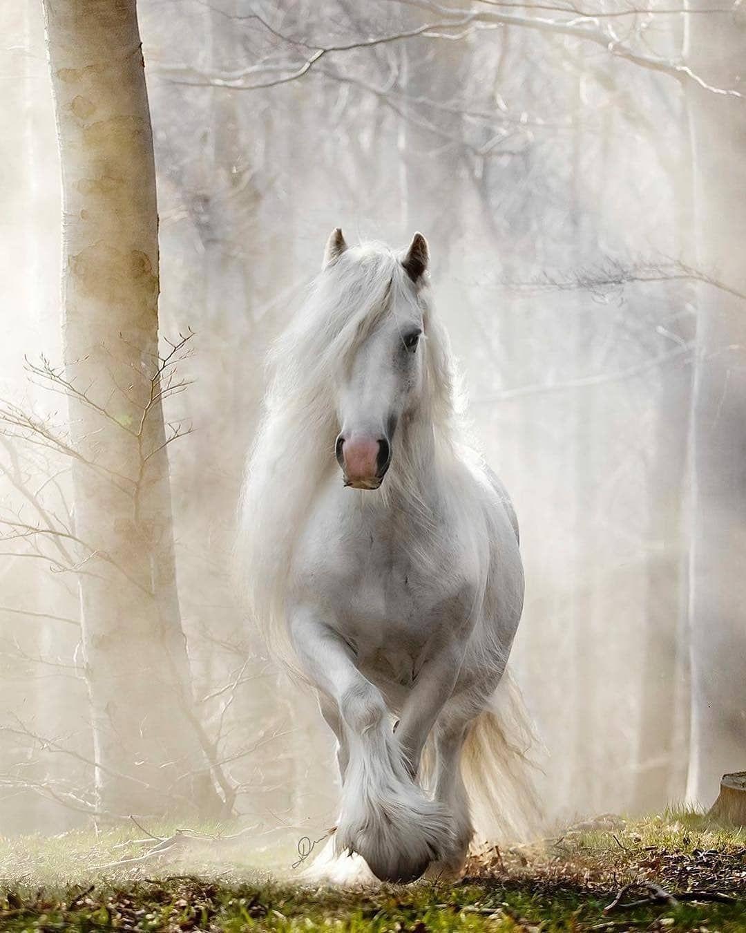 Horse Of The Instagram Auf Instagram Faszinierende Schonheit Aus Katarzyna Photo Equ In 2020 Grosse Pferde Pferde Wallpaper Pferde