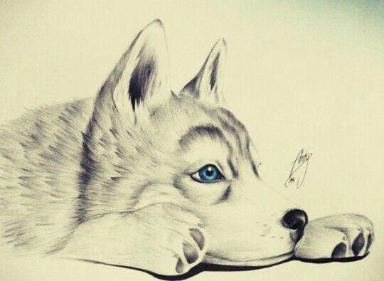 Pequeño lobo bebe | Lobos | Pinterest | Pequeños, Bebe y Dibujo