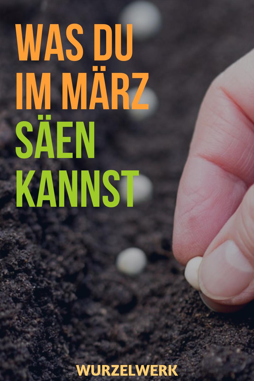 Aussaat & Pflanzen im März + Beispiel-Pflanzplan #kräutergartendesign