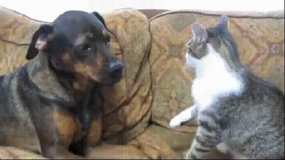 Cats Can Be Stupid Amazing Animal Stories Cute Puppy Videos Animals