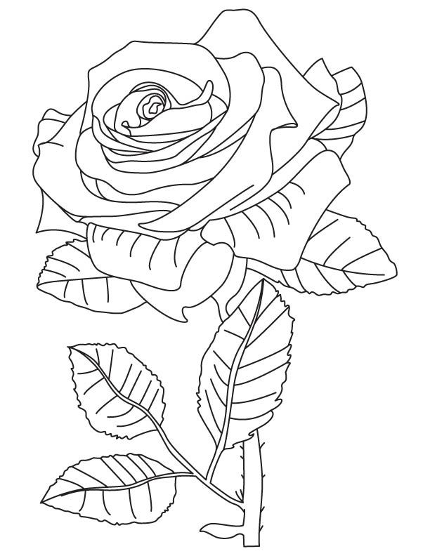 Rainbow Rose Coloring Page Rose Coloring Pages Coloring Pages For Kids Coloring For Kids