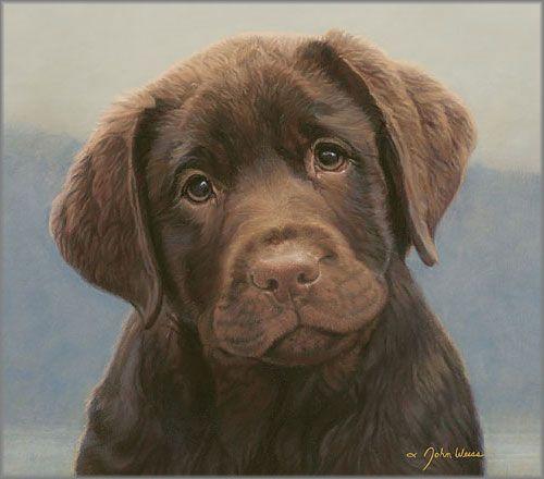 John Weiss Hot Chocolate Lab Puppies Lab Dogs Labrador Dog