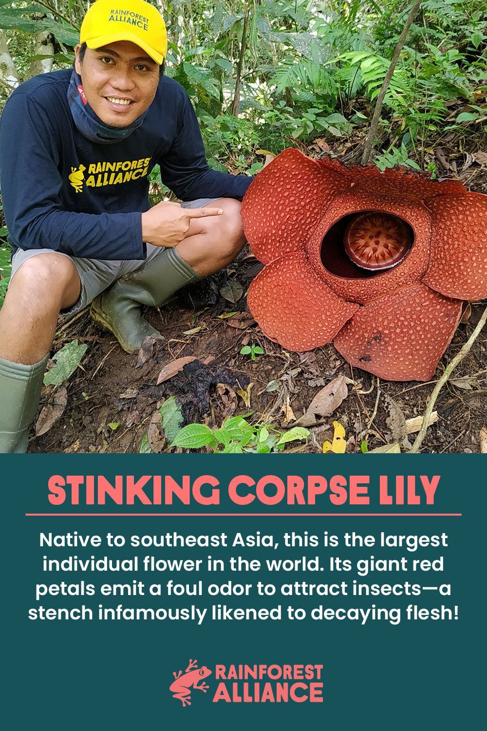 Last Week Our Colleague Bondan Pergola Came Face To Face With One Of The World S Most Gruesomely Named Flowers Rafflesia Arnoldii Aka The Stinking Corpse Lil In 2020