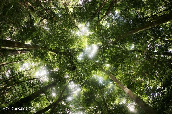 50 fotos de la naturaleza para el Día de la Tierra