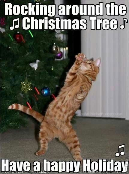 Rockin Around The Christmas Tree Holiday Cheer Christmas Cats