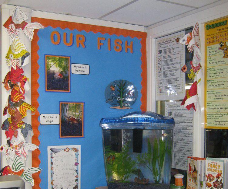 Classroom Aquarium Ideas : Our fish display classroom displays class animal