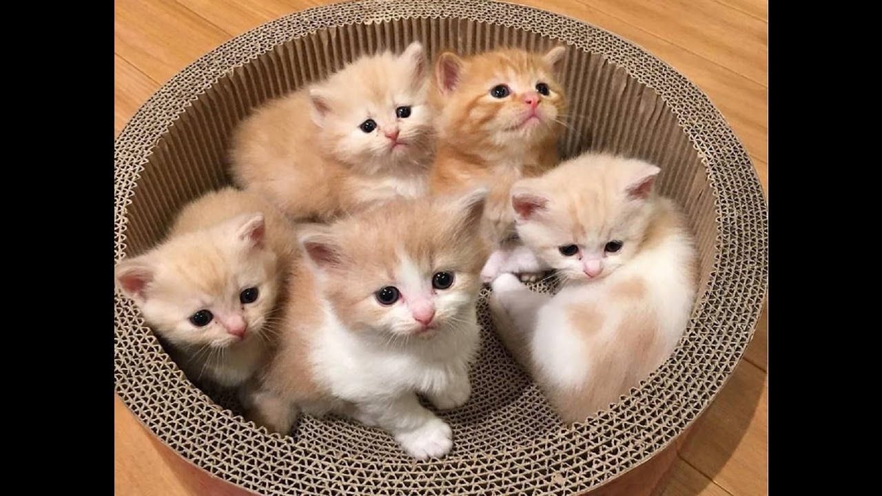 Adorable Cats Compilation Most Beautiful Cats In The World 2 Kittens Cutest Cute Cats Baby Cats