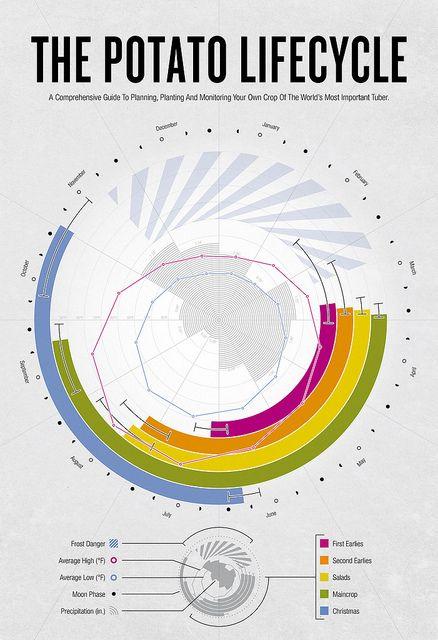 infographic key by august miller via flickr repr sentation des cycles de culture des pommes. Black Bedroom Furniture Sets. Home Design Ideas