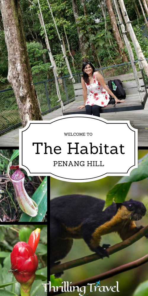 A visit to The Habitat Penang Hill is a perfect way to glimpse at the rainforests of Penang, Malaysia. A perfect outing for nature lovers, families & kids