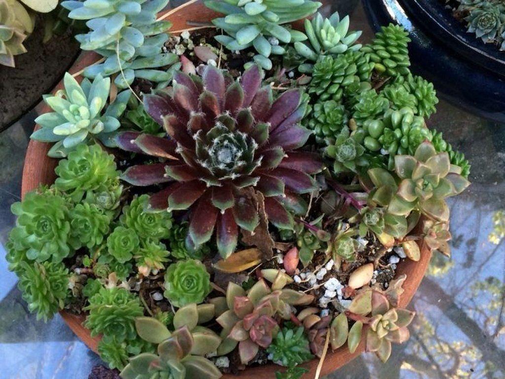 C mo combinar suculentas en el mismo recipiente - Composiciones de cactus ...