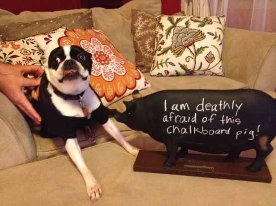 I am deathly afraid of this chalkboard pig!