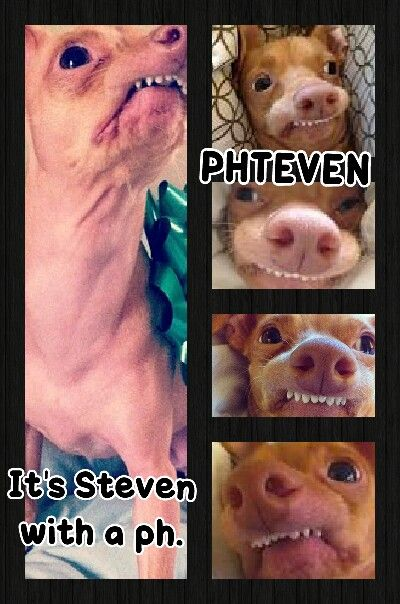 Phteven. I. Love..this. dog.