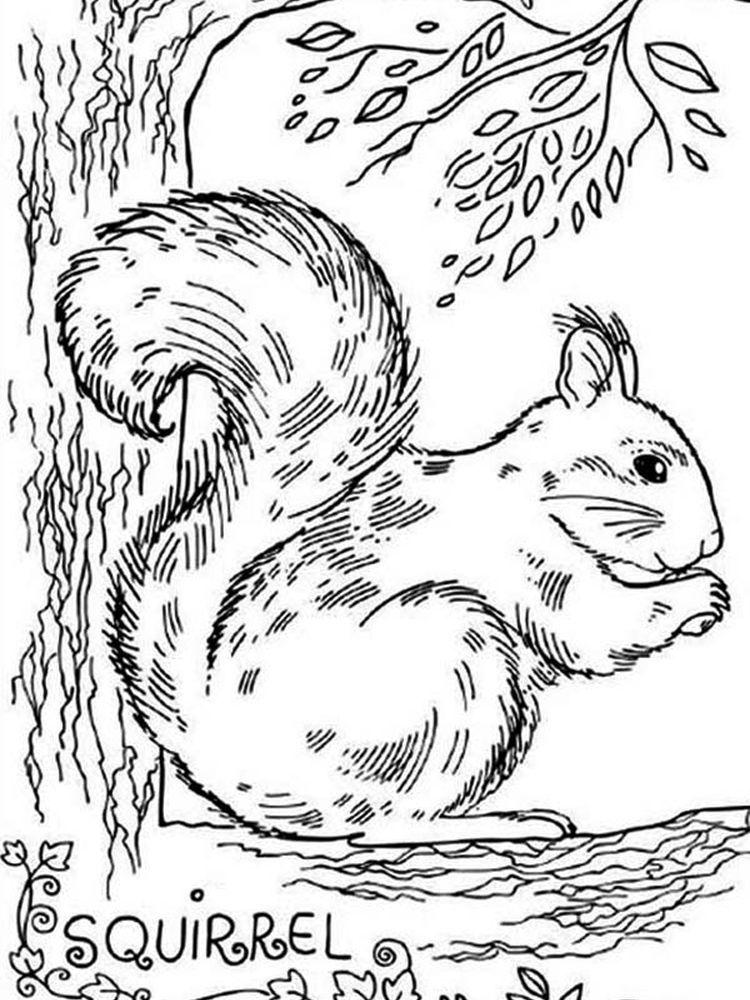 Squirrel Coloring Page Printable Squirrel coloring page