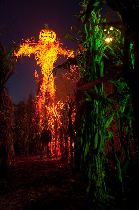Best 25 haunted corn maze ideas on pinterest haunted for Haunted woods ideas
