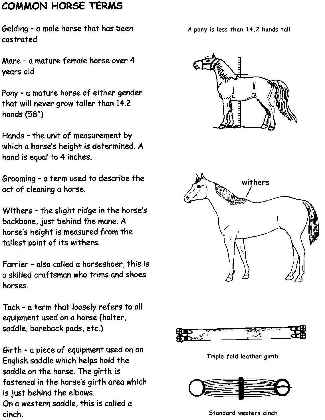 Common Horse Terms Hand Out 1
