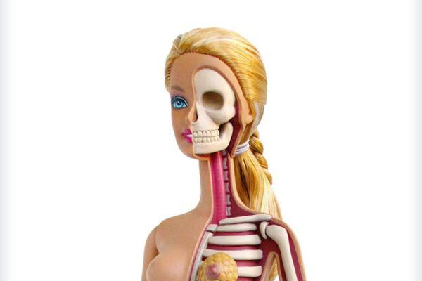 La anatomía de Barbie   Pinterest   Barbie, Anatomía y Los famosos