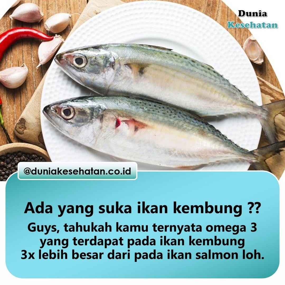 Namanya Adalah Ikan Kembung Berasal Dari Famili Scombridae Dan Genus Rastrelliger Ikan Ini Adalah Jenis Ikan Pelagis Kecil Yang Menjadi Komoditas Utama Para N