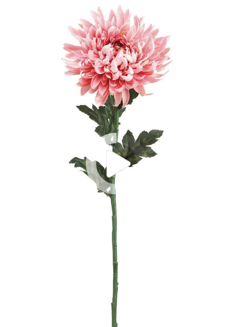 Chrysanthemum Silk Flower In Mauve Pink 7 Bloom Chrysanthemum Flower Tattoo Birth Flower Tattoos Chrysanthemum Tattoo