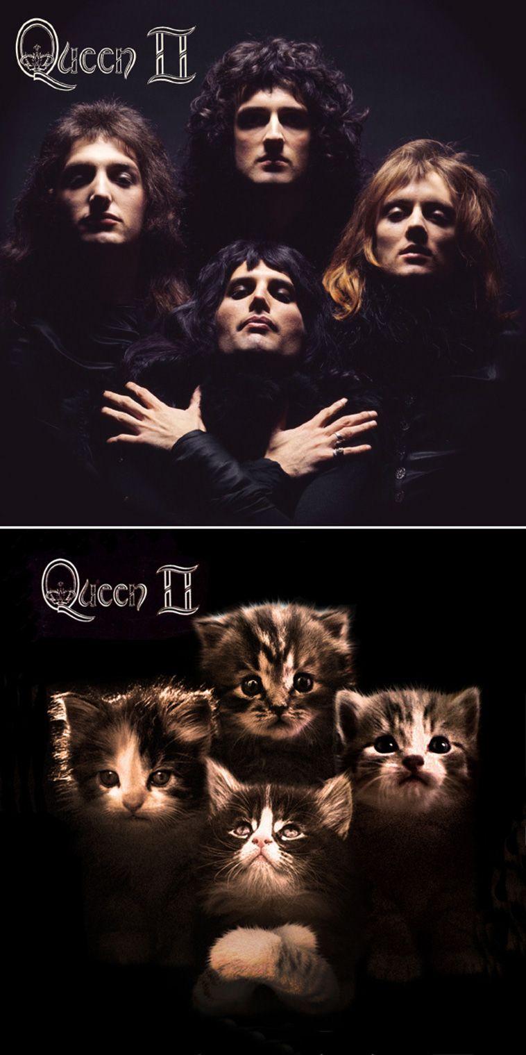 The Kitten Covers 19 Classic Album Covers Recreated With Cats Iconic Album Covers Classic Album Covers Queen Album Covers