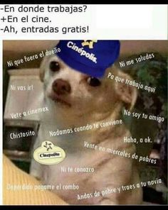 Memes Perro Chihuahua Enojado Google Search Memes Memes Divertidos Memes Graciosos