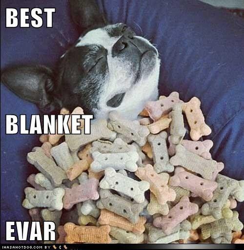 funny dog pictures - BEST BLANKET EVAR