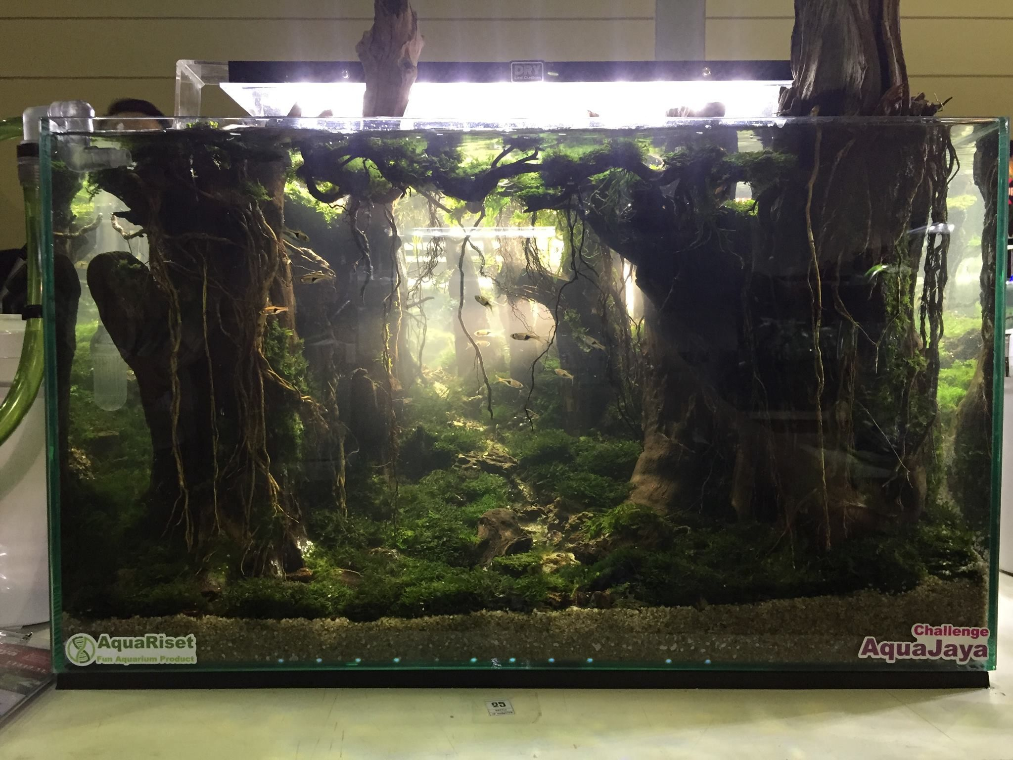 Fish Aquarium Rates In Delhi - Stan chung stunning aquascapes in the best live scaping